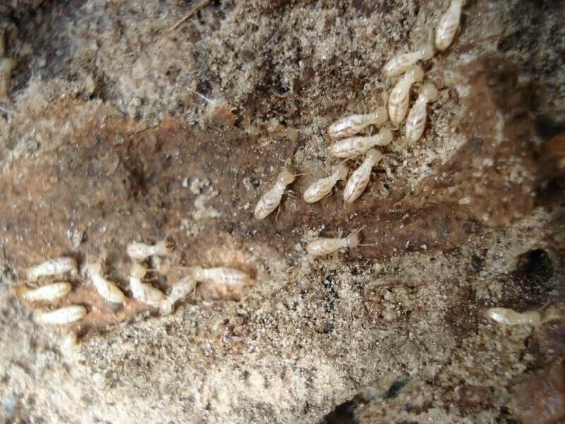 شركة مكافحة النمل الابيض بمكة