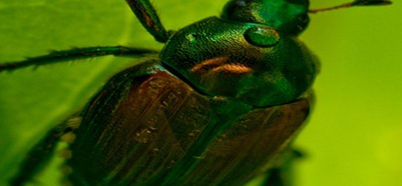 إبادة حشرات الحقول والمزارع بدون كيماويات