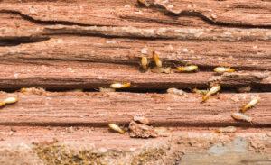 شركة مكافحة النمل الأبيض بالدمام